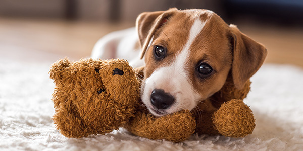 Help Your Dog Adjust to a New Home